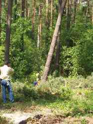 Obalanie drzewa na cel