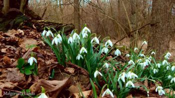 Cztery pory roku w Gminie Rudniki - wiosna