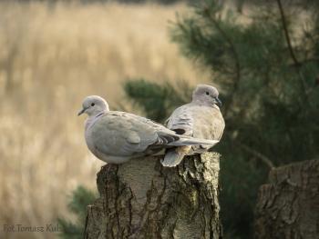 Okolice Bobrowy - Sierpówka