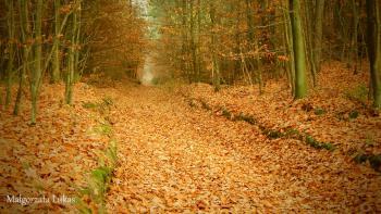 Cztery pory roku w Gminie Rudniki - jesień