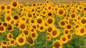 Cztery pory roku w Gminie Rudniki - lato