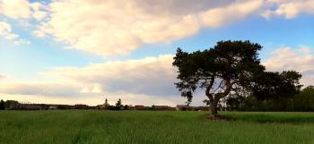 Wiosenny krajobraz - Sołectwo Dalachów