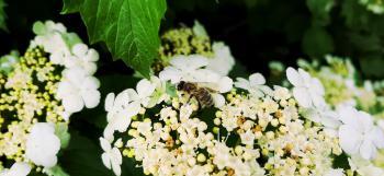 Okoliczna flora