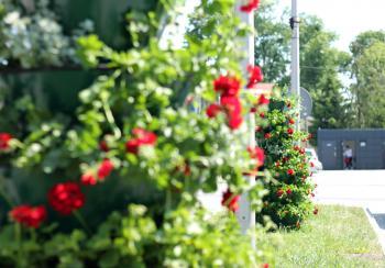 Galeria Ogrodniczki