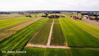 Truskawkowe pola - Sołectwo Kuźnica