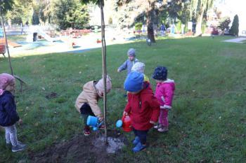 Galeria Dzień drzewa