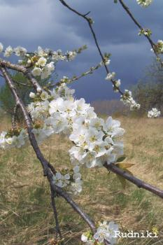 Galeria Wyślij e-Kartkę - Wiosna